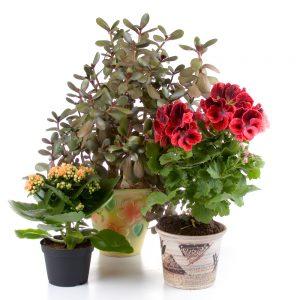 tipo de vasos para plantar
